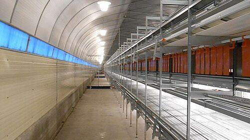 Élevage en volière NaturaStep : Les poules peuvent circuler librement sous les volières