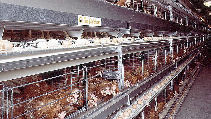 Élevage de poules pondeuses avec des cages UNIVENT