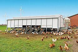 Bâtiment mobile avec poules pondeuses en élevage plein air ou au sol