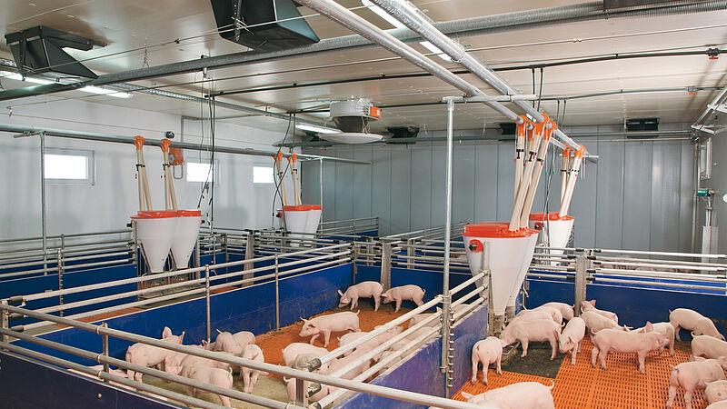 Systèmes de logement pour l'élevage de porcelets (alimentation sèche)