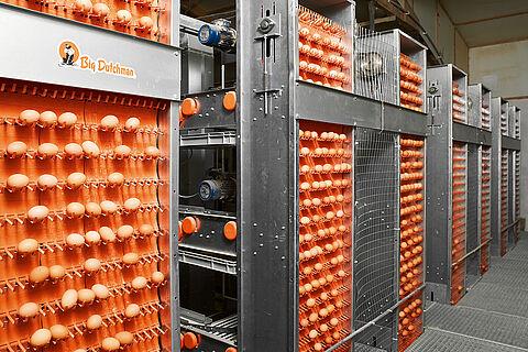 Système de ramassage des œufs