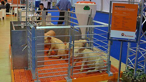 Matériel d'élevage pour l'engraissement des porcs