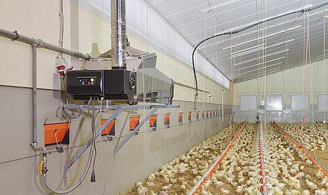 Réduction des coûts de chauffage et un climat intérieur sain dans l'élevage de volailles