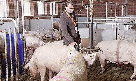 La porcherie et le système d'alimentation DAC