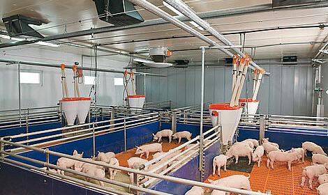 Alimentation soupe et sèche dans l'élevage de porcelets: Un vue d'ensemble des techniques d'alimentation