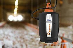 Figure capteur d'ammoniac dans l'élevage de poulets de chair