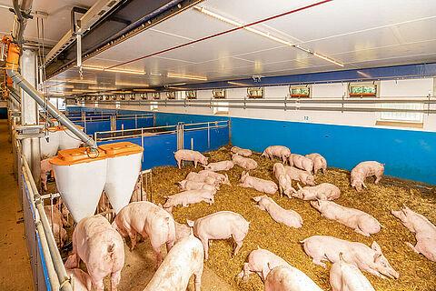 Concept d'élevage sur paille Xaletto