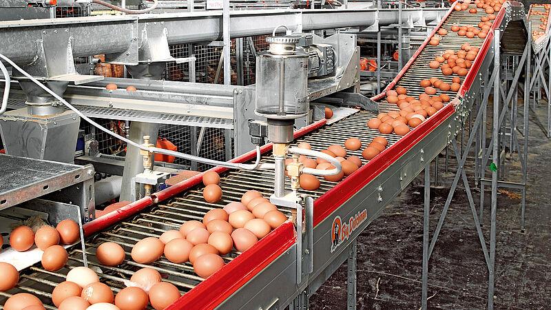 Ramassage des œufs