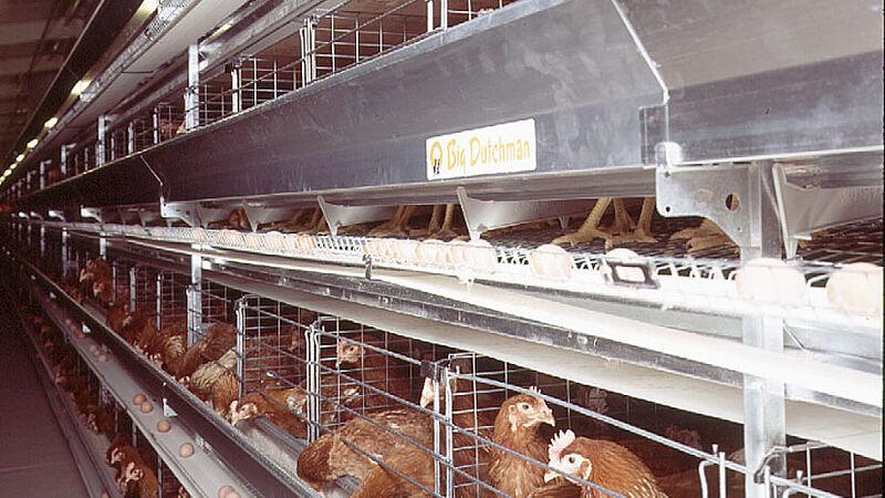 Production d'œufs avec UNIVENT