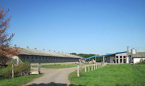 À la ferme de Karađorđevo, quatre poulalliers ont été équipés de matériel d'èlevage Big Dutchman.