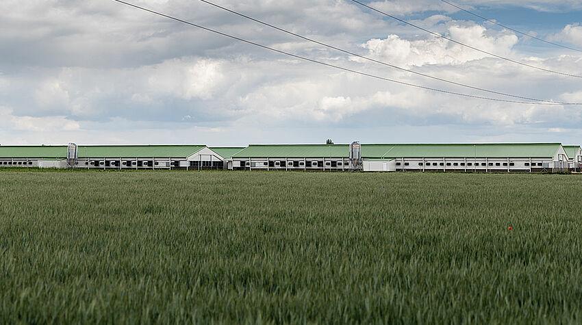 Nouveaux bâtiments pour l'élevage de reproducteurs vus de loin