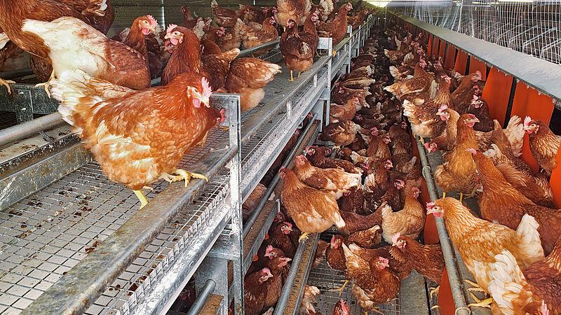 Systèmes alternatives: NATURA-Nova (élevage au sol et en plein air)