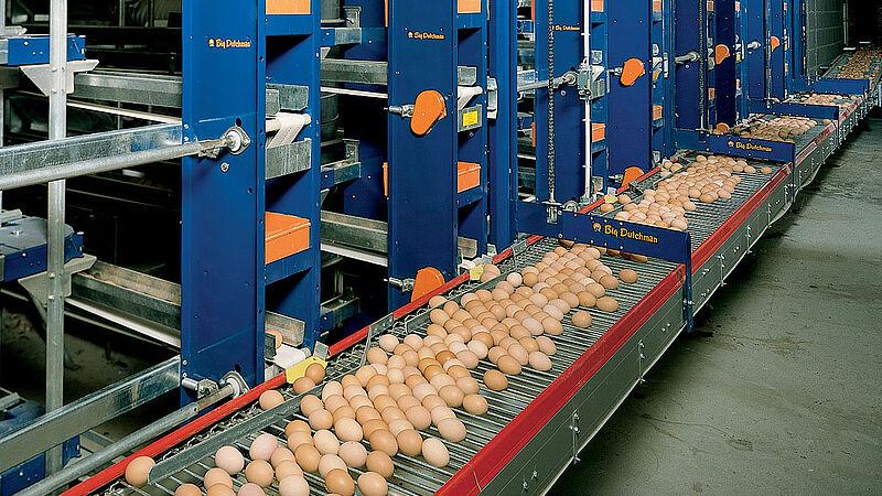 L'ascenseur pour le ramassage d'œufs dans le poulailler