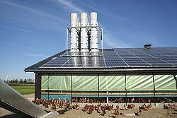 Bâtiment avec poules pondeuses à l'air libre