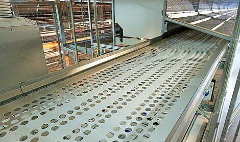 Equipement sur mesure : La bande longitudinale d'œufs