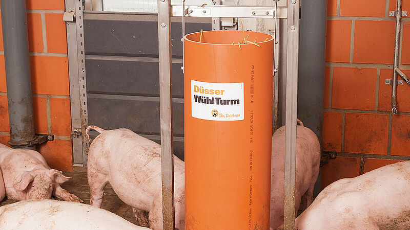 Matériel de jeu pour l'engraissement des porcs