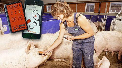 BestReader : lecture pratique des marques d'oreille dans l'élevage des truies