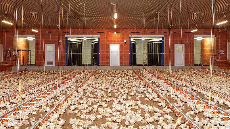 Traitement de l'air évacué pour l'élevage de volailles avec MagixX