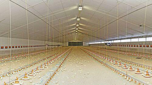 Bâtiment avec vue sur l'élevage de poulets de chair