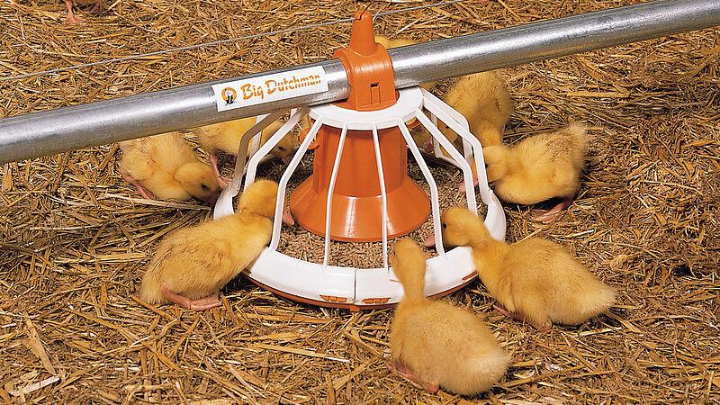 Le plateau d'aliments Big Pan Plus pour la finition des canards