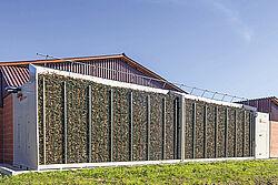 Façade du bâtiment remplie de racines d'arbres