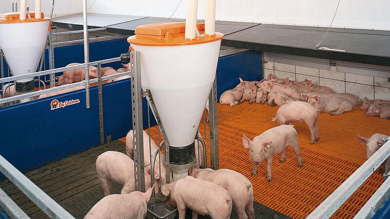 Chauffage par zone - idéal pour l'élevage des porcelets
