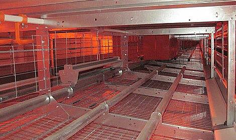 Systèmes avicoles pour l'élevage des poules pondeuses en groupes