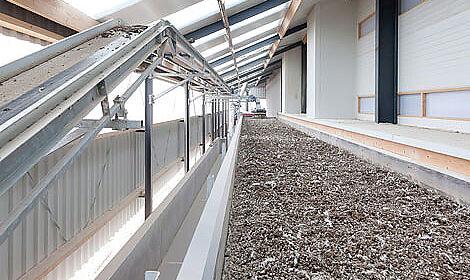 La couche de substrat peut atteindre 20 cm, ce qui améliore l'ambiance dans le poulailler