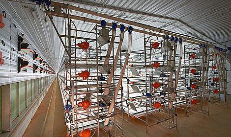 A l'intérieur du poulailler AviMax