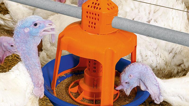 Plateau d'aliments Gladiator pour l'élevage de dindes