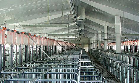 Matériel d'élevage Big Dutchman : le centre de saillie