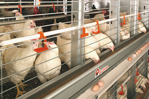 Systèmes d'élevage modernes : EUROVENT-Parents
