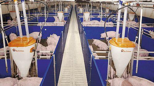Matériel d'élevage pour l'engraissement moderne des porcs