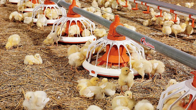 Plateau d'aliments FLUXX pour l'élevage de poulets de chair