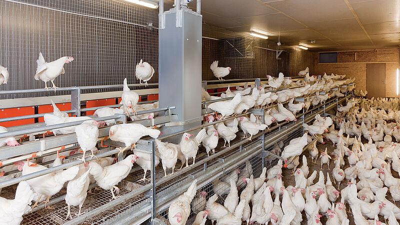Élevage de poules pondeuses avec NATURA Floor