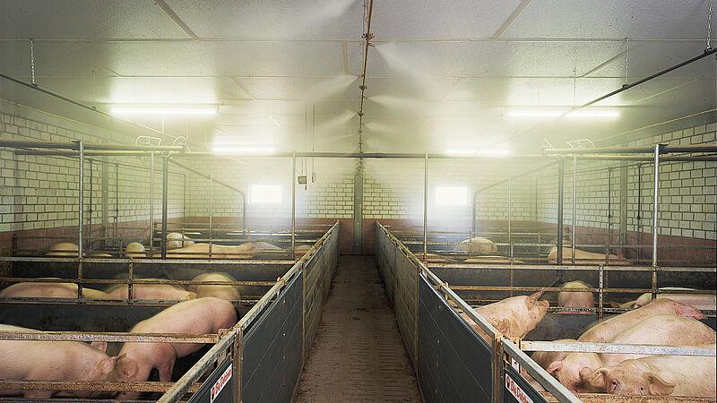 CombiCool - Le système de nébulisation à haute pression pour porcs en finition