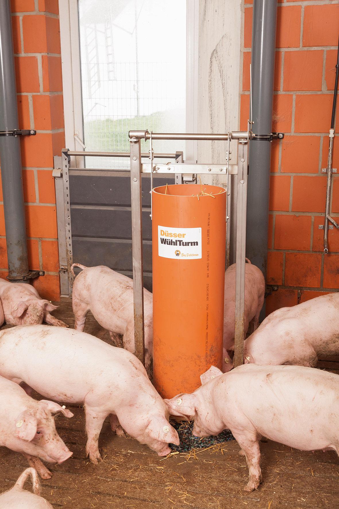 Excellent phrase Pig sperm volume word